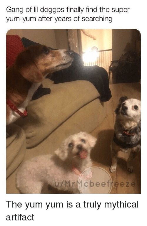 Reddit, Gang, and Super: Gang of lil doggos finally find the super  yum-yum after years of searching  ú/MrMcbeefheez