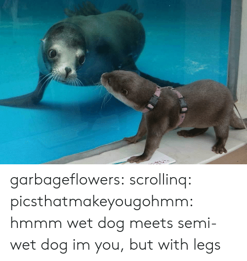 Tumblr, Blog, and Http: garbageflowers:  scrollinq:   picsthatmakeyougohmm: hmmm  wet dog meets semi-wet dog   im you, but with legs