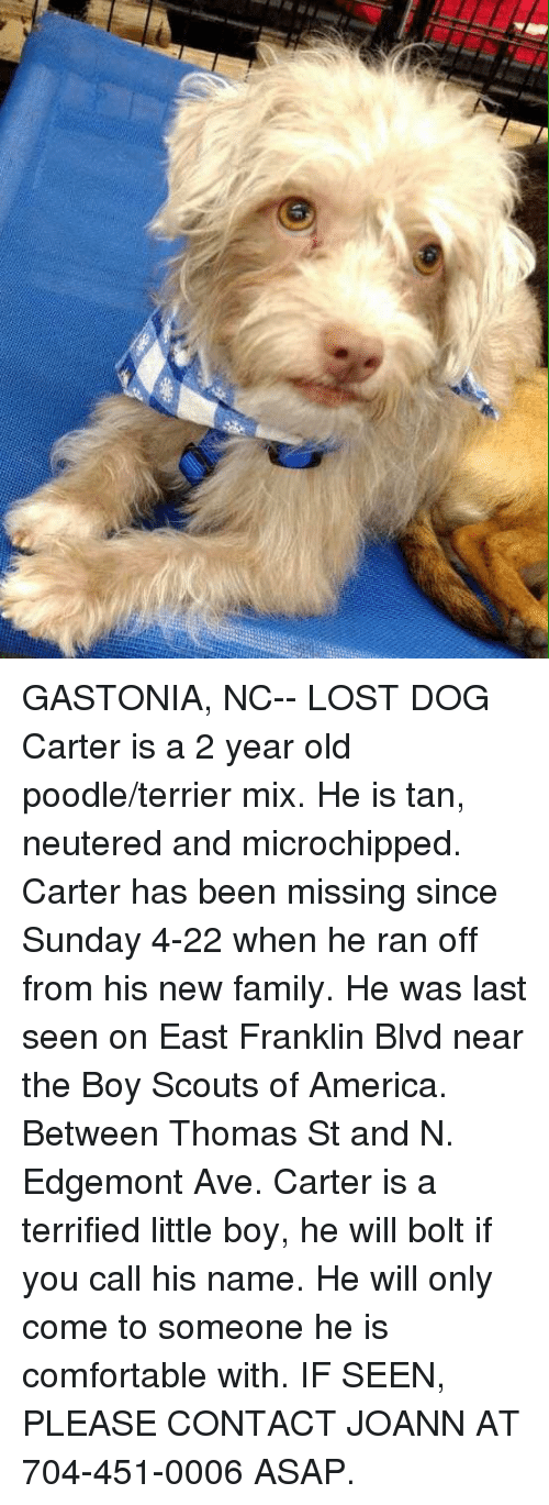 America, Comfortable, and Family: GASTONIA, NC-- LOST DOG  Carter is a 2 year old poodle/terrier mix. He is tan, neutered and microchipped. Carter has been missing since Sunday 4-22 when he ran off from his new family. He was last seen on East Franklin Blvd near the Boy Scouts of America. Between Thomas St and N. Edgemont Ave.   Carter is a terrified little boy, he will bolt if you call his name. He will only come to someone he is comfortable with.  IF SEEN, PLEASE CONTACT JOANN AT 704-451-0006 ASAP.