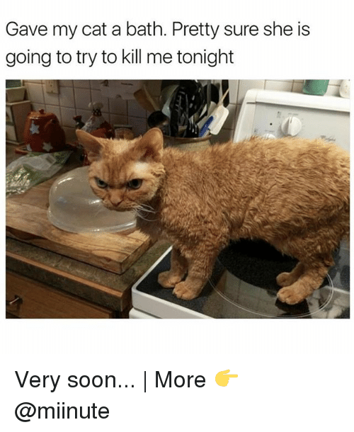 Funny, Soon..., and Cat: Gave my cat a bath. Pretty sure she is  going to try to kill me tonight Very soon... | More 👉 @miinute