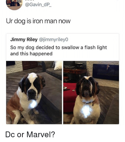Funny, Iron Man, and Marvel: @Gavin_dP  Ur dog is iron man now  Jimmy Riley @jimmyrileyO  So my dog decided to swallow a flash light  and this happened Dc or Marvel?