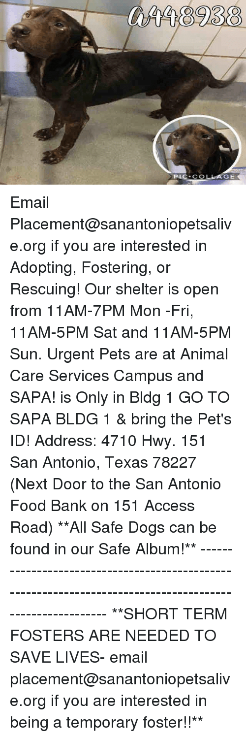 Dogs, Food, and Memes: GE Email Placement@sanantoniopetsalive.org if you are interested in Adopting, Fostering, or Rescuing!  Our shelter is open from 11AM-7PM Mon -Fri, 11AM-5PM Sat and 11AM-5PM Sun.  Urgent Pets are at Animal Care Services Campus and SAPA! is Only in Bldg 1 GO TO SAPA BLDG 1 & bring the Pet's ID! Address: 4710 Hwy. 151 San Antonio, Texas 78227 (Next Door to the San Antonio Food Bank on 151 Access Road)  **All Safe Dogs can be found in our Safe Album!** ---------------------------------------------------------------------------------------------------------- **SHORT TERM FOSTERS ARE NEEDED TO SAVE LIVES- email placement@sanantoniopetsalive.org if you are interested in being a temporary foster!!**