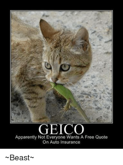Geico Quote Auto Insurance Captivating Geico Apparently Not Everyone Wants A Free Quote On Auto Insurance