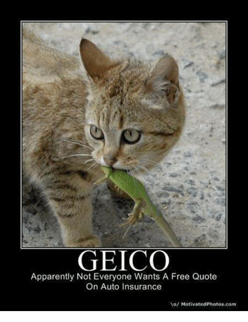 geico apparently not everyone wants a free quote on auto 4635089 ✅ 25 best memes about auto insurance auto insurance memes,Auto Insurance Memes