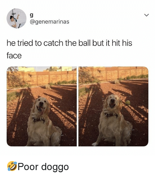 Memes, 🤖, and Doggo: @genemarinas  he tried to catch the ball but it hit his  face 🤣Poor doggo
