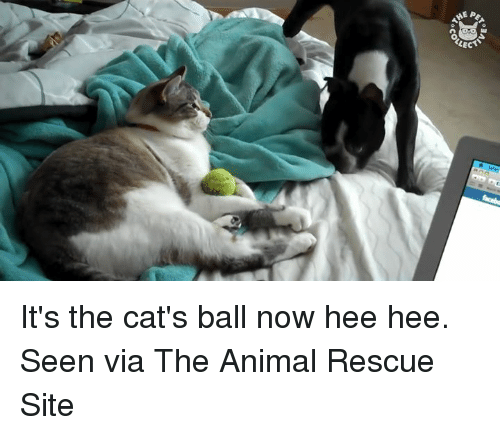 Animals, Anime, and Cats: gEP  ECT  Ao34  °Co It's the cat's ball now hee hee. Seen via The Animal Rescue Site