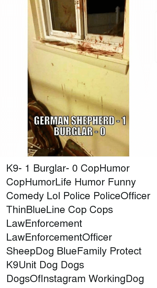 Dogs, Funny, and Lol: GERMAN SHEPHERD-1  BURGLAR-0 K9- 1 Burglar- 0 CopHumor CopHumorLife Humor Funny Comedy Lol Police PoliceOfficer ThinBlueLine Cop Cops LawEnforcement LawEnforcementOfficer SheepDog BlueFamily Protect K9Unit Dog Dogs DogsOfInstagram WorkingDog