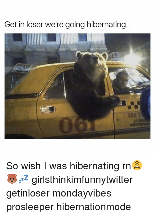Funny, Hibernate, and Hibernation: Get in loser we're going hibernating So wish I was hibernating rn😩🐻💤 girlsthinkimfunnytwitter getinloser mondayvibes prosleeper hibernationmode