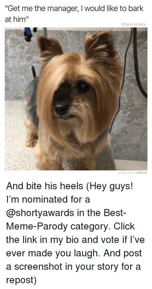 "Click, Funny, and Meme: ""Get me the manager, I would like to bark  at him  @tank.sinatra  MADE WITH MOMUS And bite his heels (Hey guys! I'm nominated for a @shortyawards in the Best-Meme-Parody category. Click the link in my bio and vote if I've ever made you laugh. And post a screenshot in your story for a repost)"