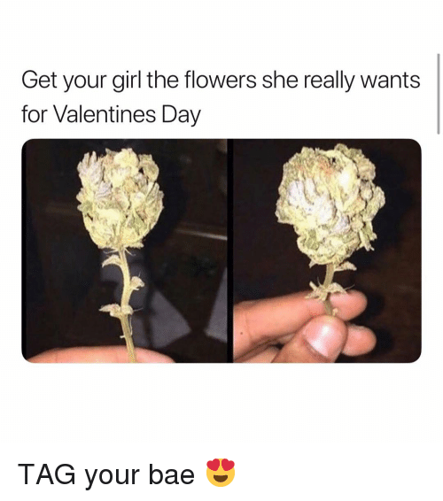 Bae, Valentine's Day, and Weed: Get your girl the flowers she really wants  for Valentines Day TAG your bae 😍