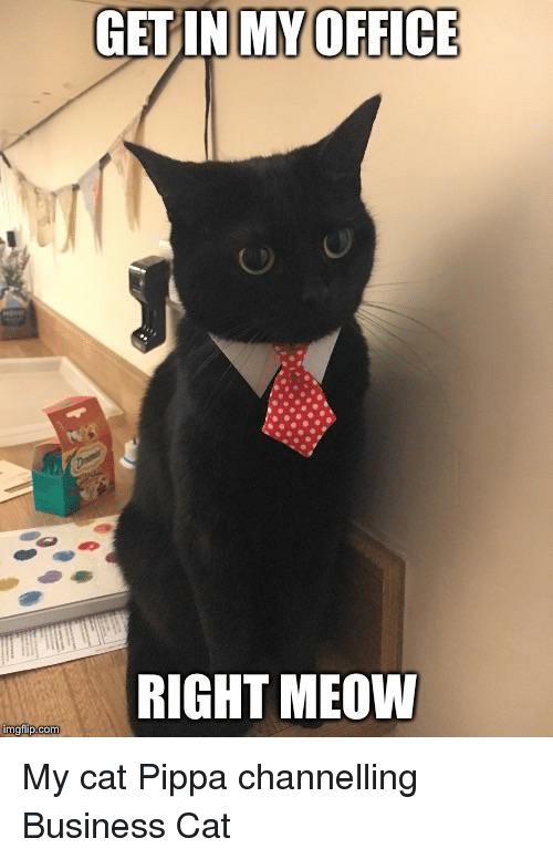 Getin My Office Right Meow Business Meme On Meme