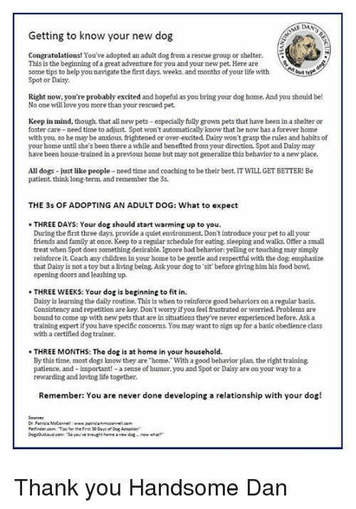 Getting To Know Your New Dog Congratulations  You U0026 39 Ve Adopted An Adult Dog From A Rescue Group Or