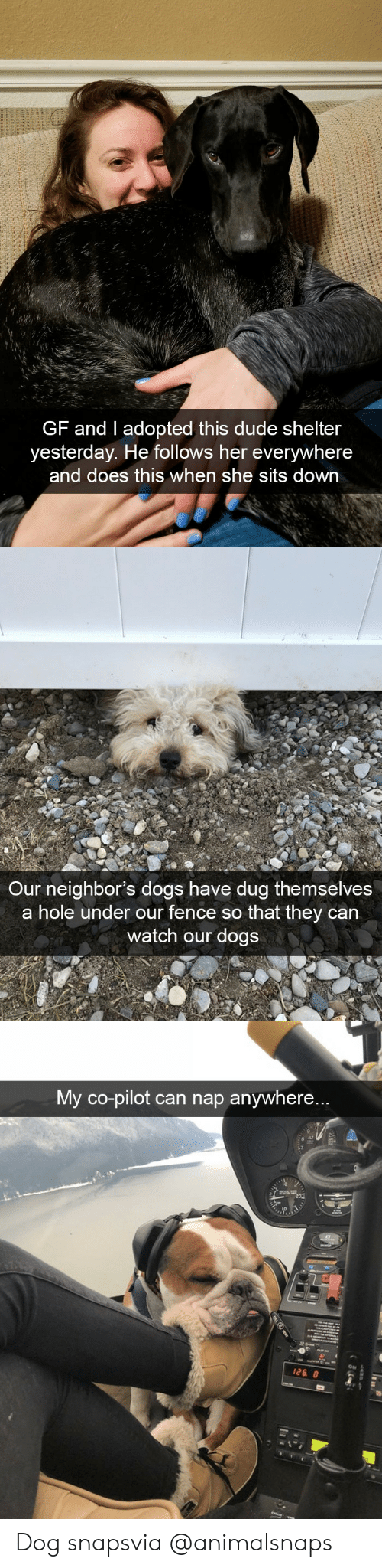 Dogs, Dude, and Target: GF and I adopted this dude shelter  yesterday. He follows her everywhere  and does this when she sits down   Our neighbor's dogs have dug themselves  a hole under our fence so that they can  watch our dogs   My co-pilot can nap anywhere...  ON Dog snapsvia @animalsnaps