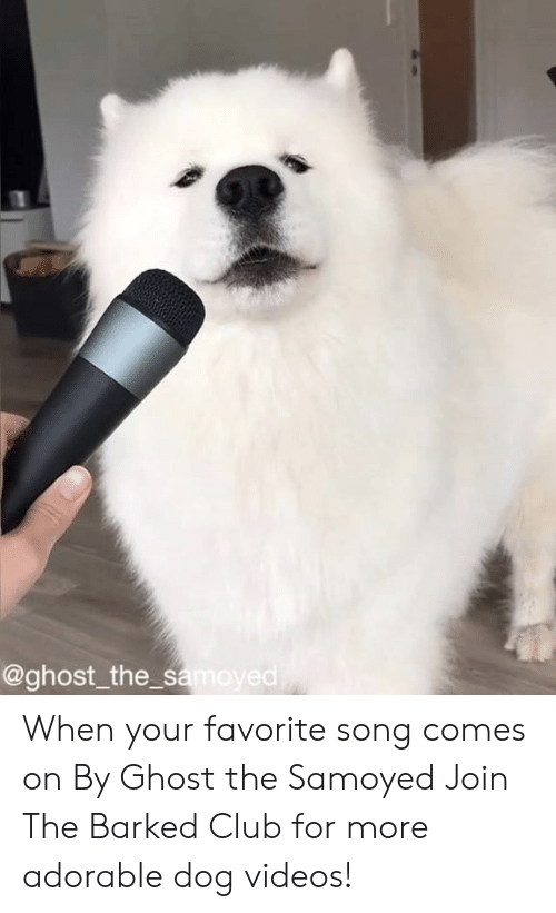 Club, Dank, and Videos: @ghost_the s  ed When your favorite song comes on By Ghost the Samoyed  Join The Barked Club for more adorable dog videos!