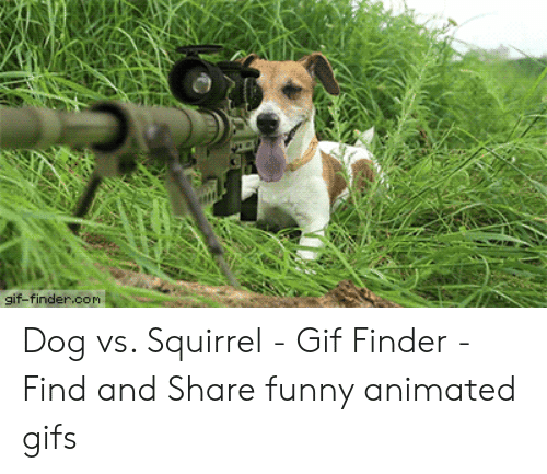 Gif-Findercom Dog vs Squirrel - Gif Finder - Find and Share