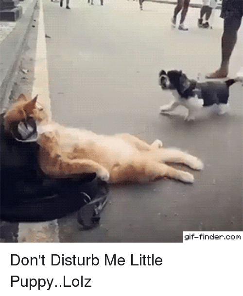 Funny, Gif, and Puppy: gif-finder.com Don't Disturb Me Little Puppy..Lolz