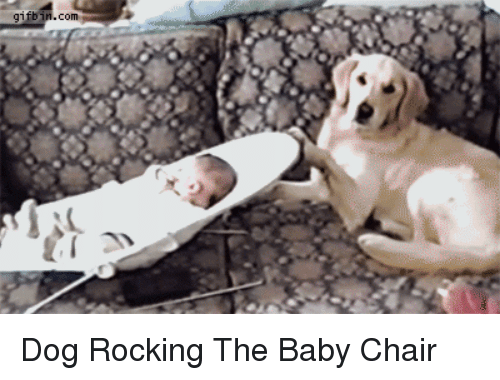 Remarkable Gifbinco Dog Rocking The Baby Chair Chair Meme On Me Me Squirreltailoven Fun Painted Chair Ideas Images Squirreltailovenorg