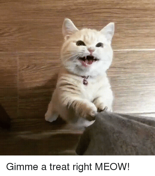 Right Meow