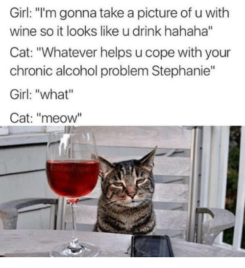 """Cats, Drinking, and Girls: Girl: """"I'm gonna take a picture of u with  wine so it looks like u drink hahaha""""  Cat: """"Whatever helps u cope with your  chronic alcohol problem Stephanie""""  Girl: """"what""""  Cat: """"meow"""""""