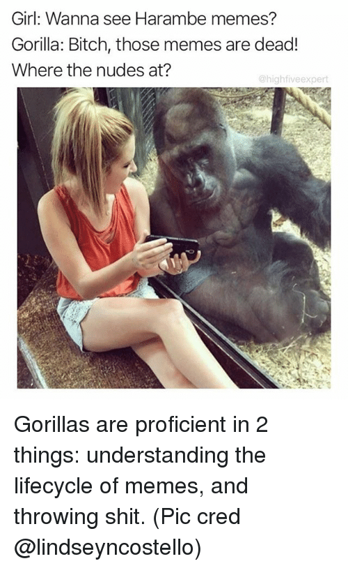 Bitch, Memes, and Nudes: Girl: Wanna see Harambe memes?  Gorilla: Bitch, those memes are dead!  Where the nudes at?  @highfiveexpert Gorillas are proficient in 2 things: understanding the lifecycle of memes, and throwing shit. (Pic cred @lindseyncostello)