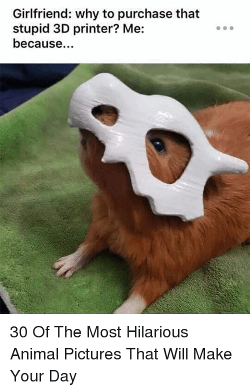 Animal, Pictures, and Girlfriend: Girlfriend: why to purchase that  stupid 3D printer? Me:  because. 30 Of The Most Hilarious Animal Pictures That Will Make Your Day
