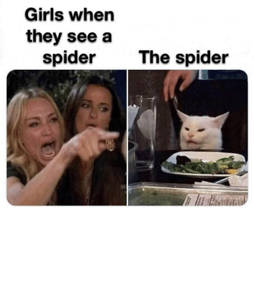 Cats, Girls, and Memes: Girls when  they see a  spider  The spider Reality TV gives us the best memes! #Memes #Cats #TVShow #RealityTV #RealHousewives