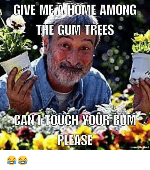 Memes, Home, and Trees: GIVE ME A HOME AMONG  THE GUM TREES  CANLLOUCH YOUR BUME  PLEASE  mematic het 😂😂
