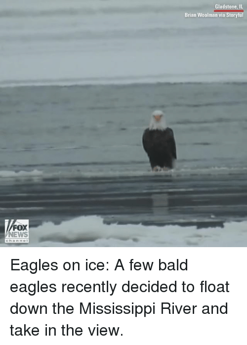 Philadelphia Eagles, Memes, and News: Gladstone, IL  Brian Woolman via Storyful  FOX  NEWS  channe Eagles on ice: A few bald eagles recently decided to float down the Mississippi River and take in the view.