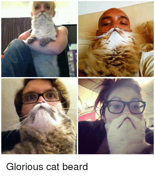 glorious cat beard 10617358 glorious cat beard beard meme on me me