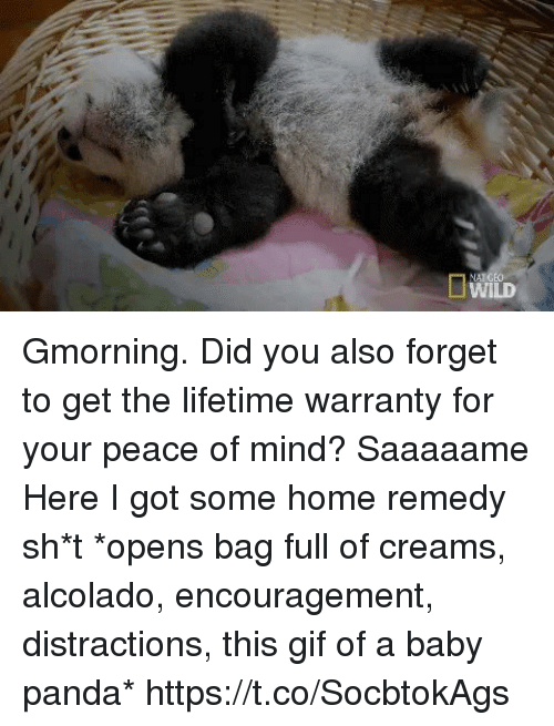 Gif, Memes, and Panda: Gmorning.  Did you also forget to get the lifetime warranty for your peace of mind? Saaaaame Here I got some home remedy sh*t *opens bag full of creams, alcolado, encouragement, distractions, this gif of a baby panda* https://t.co/SocbtokAgs