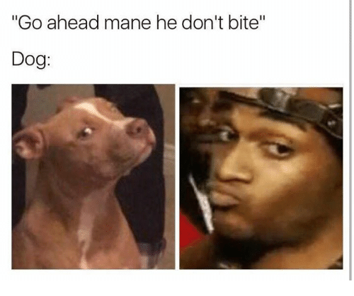 go ahead mane he dont bite dog 18992954 go ahead mane he don't bite dog dog meme on me me