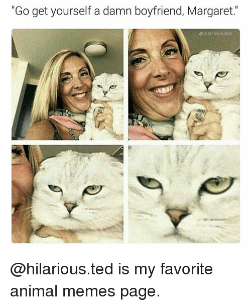 "Animals, Memes, and Ted: ""Go get yourself a damn boyfriend, Margaret.  @hilarious ted @hilarious.ted is my favorite animal memes page."