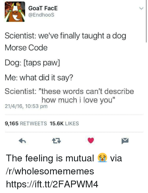 "Love, Goat, and I Love You: GoaT FacE  @EndhooS  Scientist: we've finally taught a dog  Morse Code  Dog: [taps paw]  Me: what did it say?  Scientist: ""these words can't describe  21/4/16, 10:53 pm  how much i love you  I1  9,165 RETWEETS 15.6K LIKES The feeling is mutual 😭 via /r/wholesomememes https://ift.tt/2FAPWM4"