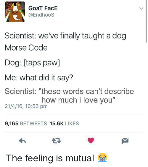 "Love, Goat, and I Love You: GoaT FacE  @EndhooS  Scientist: we've finally taught a dog  Morse Code  Dog: [taps paw]  Me: what did it say?  Scientist: ""these words can't describe  21/4/16, 10:53 pm  how much i love you  I1  9,165 RETWEETS 15.6K LIKES The feeling is mutual 😭"