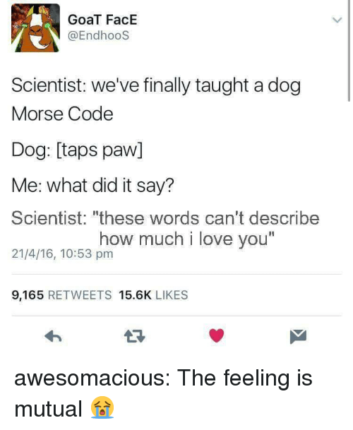 "Love, Tumblr, and Goat: GoaT FacE  @EndhooS  Scientist: we've finally taught a dog  Morse Code  Dog: [taps paw]  Me: what did it say?  Scientist: ""these words can't describe  21/4/16, 10:53 pm  how much i love you  I1  9,165 RETWEETS 15.6K LIKES awesomacious:  The feeling is mutual 😭"
