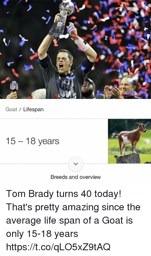 Life, Tom Brady, and Goat: Goat Lifespan  15 18 years  Breeds and overview Tom Brady turns 40 today! That's pretty amazing since the average life span of a Goat is only 15-18 years https://t.co/qLO5xZ9tAQ