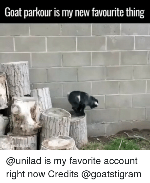 Funny, Goat, and Parkour: Goat parkour is my new favourite thing @unilad is my favorite account right now Credits @goatstigram