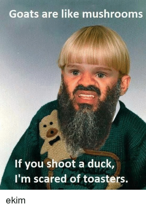 Memes, Duck, and 🤖: Goats are like mushrooms  If you shoot a duck,  I'm scared of toasters ekim
