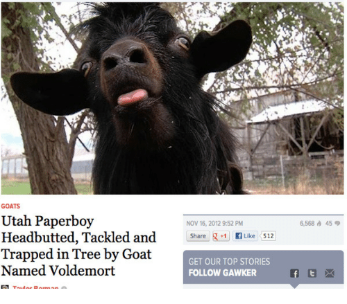 GOATS Utah Paperboy Headbutted Tackled and Trapped in Tree