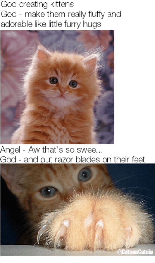 Adult Swim Hookup A Game Memes With Kittens
