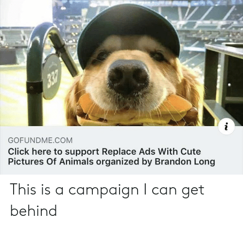 Animals, Click, and Cute: GOFUNDME COM  Click here to support Replace Ads With Cute  Pictures Of Animals organized by Brandon Long This is a campaign I can get behind