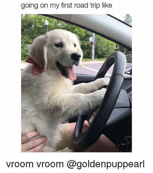Memes, 🤖, and Road Trip: going on my first road trip like vroom vroom @goldenpuppearl