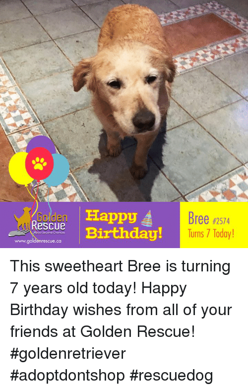 Birthday Friends And Memes Golden Ha Rescue Happy Bree 2574