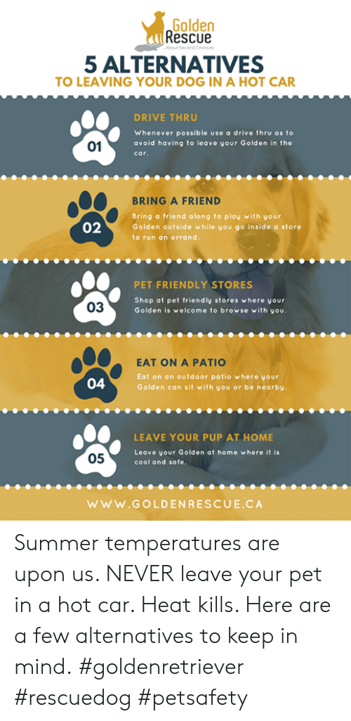 Golden Rescue About Second Chonces 5 ALTERNATIVES TO LEAVING