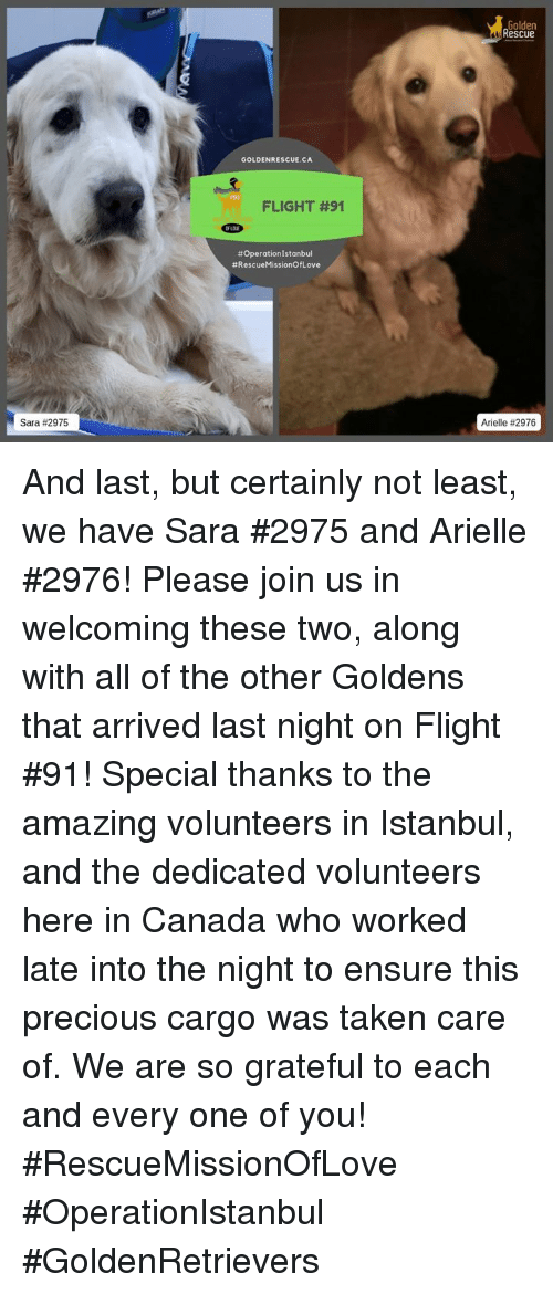 Memes, Precious, and Taken: Golden  Rescue  GOLDENRESCUE.CA  r91  FLIGHT #91  # Operation Istanbul  #RescueMissionOfLove  Sara #2975  Arielle And last, but certainly not least, we have Sara #2975 and Arielle #2976! Please join us in welcoming these two, along with all of the other Goldens that arrived last night on Flight #91!   Special thanks to the amazing volunteers in Istanbul, and the dedicated volunteers here in Canada who worked late into the night to ensure this precious cargo was taken care of. We are so grateful to each and every one of you!  #RescueMissionOfLove #OperationIstanbul #GoldenRetrievers