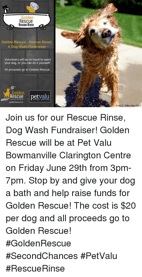 Golden rescue rescue rinse golden rescue rescue rinse a dog wash friday memes and help golden rescue rescue rinse golden rescue rescue rinse solutioingenieria Image collections