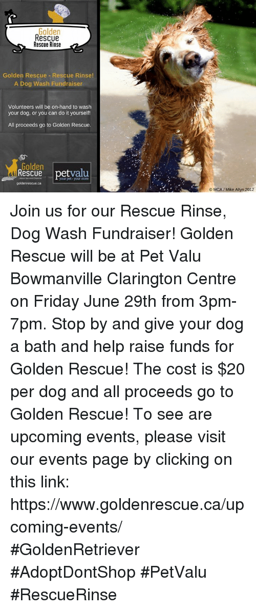 Golden rescue rescue rinse golden rescue rescue rinse a dog wash friday memes and help golden rescue rescue rinse golden rescue rescue rinse solutioingenieria Gallery