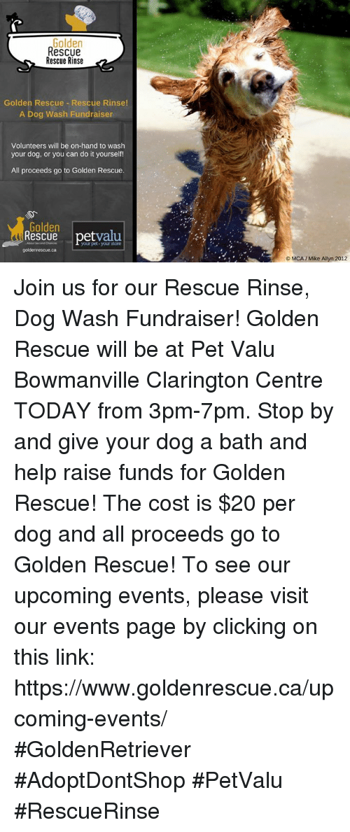 Golden rescue rescue rinse golden rescue rescue rinse a dog wash memes help and link golden rescue rescue rinse golden rescue rescue rinse solutioingenieria Choice Image