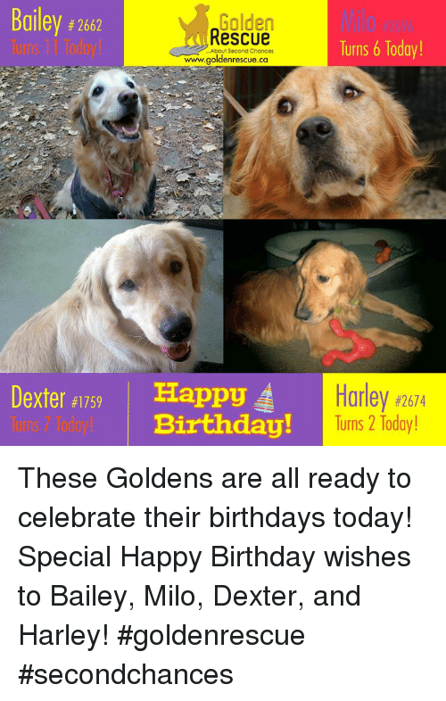 Golden Rescue Wwwgoldenrescueca Alley 2662 1l0 4269 Turns 6 Today