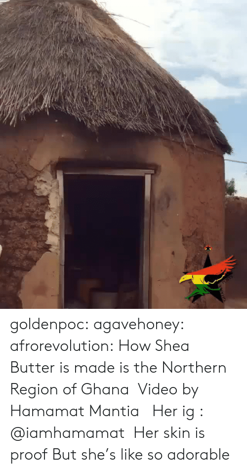 Tumblr, Blog, and Ghana: goldenpoc:  agavehoney:  afrorevolution:  How Shea Butter is made is the Northern Region of Ghana  Video by Hamamat Mantia   Her ig : @iamhamamat   Her skin is proof  But she's like so adorable